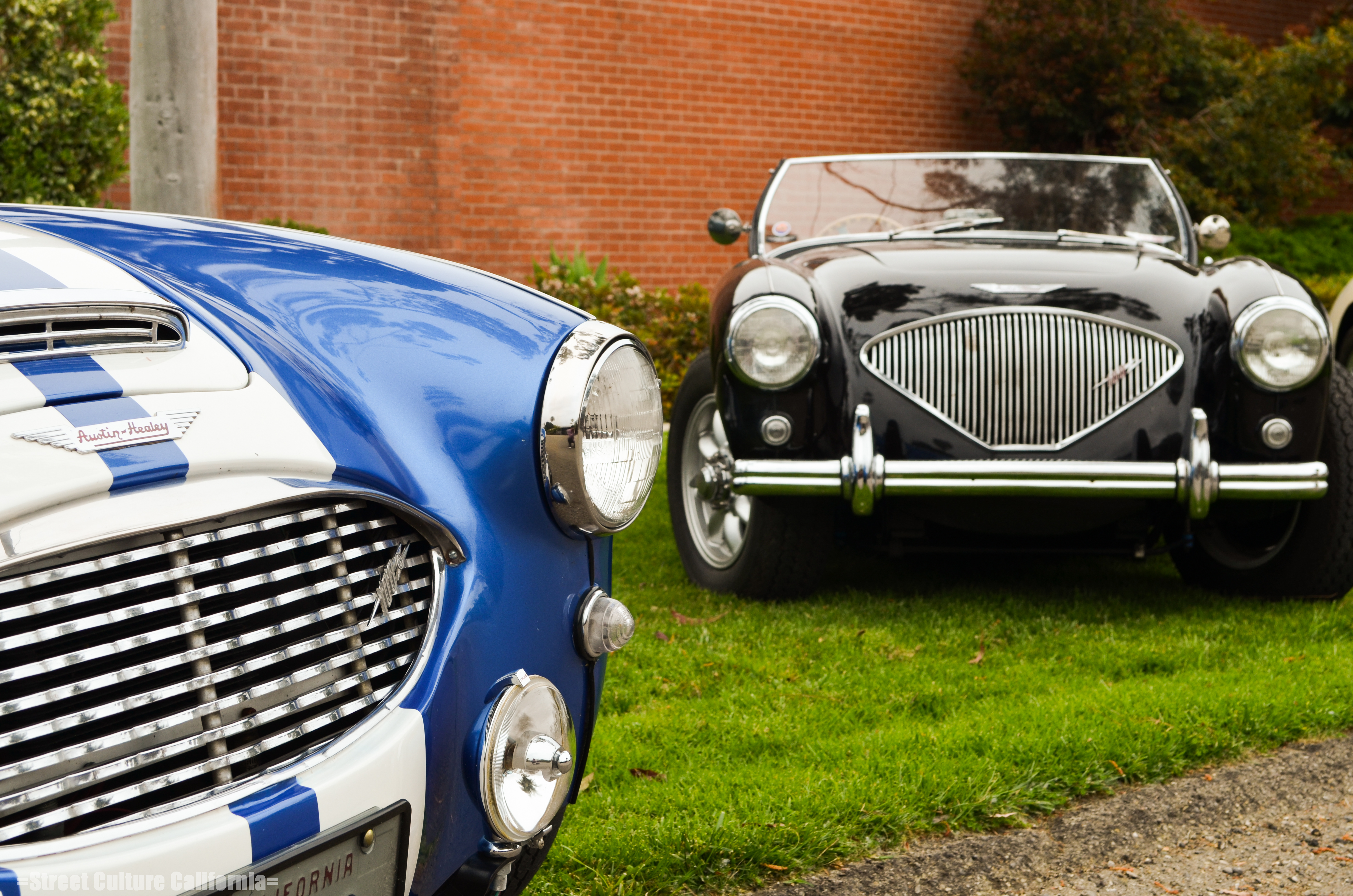 Moss motors and the healey club street culture california for Moss motors used cars
